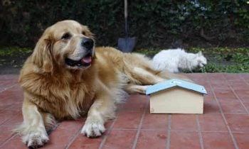 What makes a great dog house